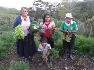 Cosecha-de-hortalizas-en-los-biohuertos-en-Montevideo.
