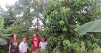 eucalipto de homero con 10 meses