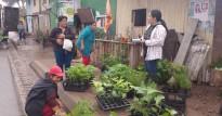 entrega-de-plantas-de-especies-forestales-para-reforestacion-mixta-en-la-comunidad-de-margarita