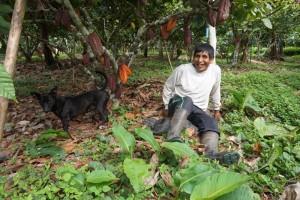 csm_cacao_agroforestry_mader_lisa_dde1506117