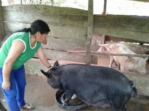 schweinzucht-von-antonia-finanziert-mit-dem-rotativfonds